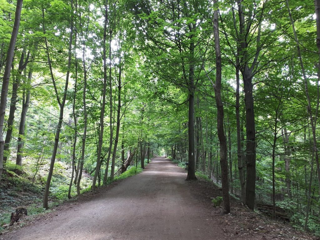 The Chedoke Radial Trail is part of the Bruce Trail and winds along the escarpment, passing several waterfalls. It's one of the great trails for kids in Hamilton!