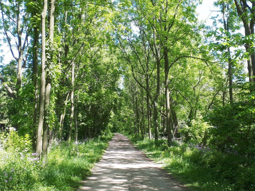 The Hamilton/Brantford Rail Trail stretches from Dundas to Brantford and is one of the great trails for kids in Hamilton, ON.